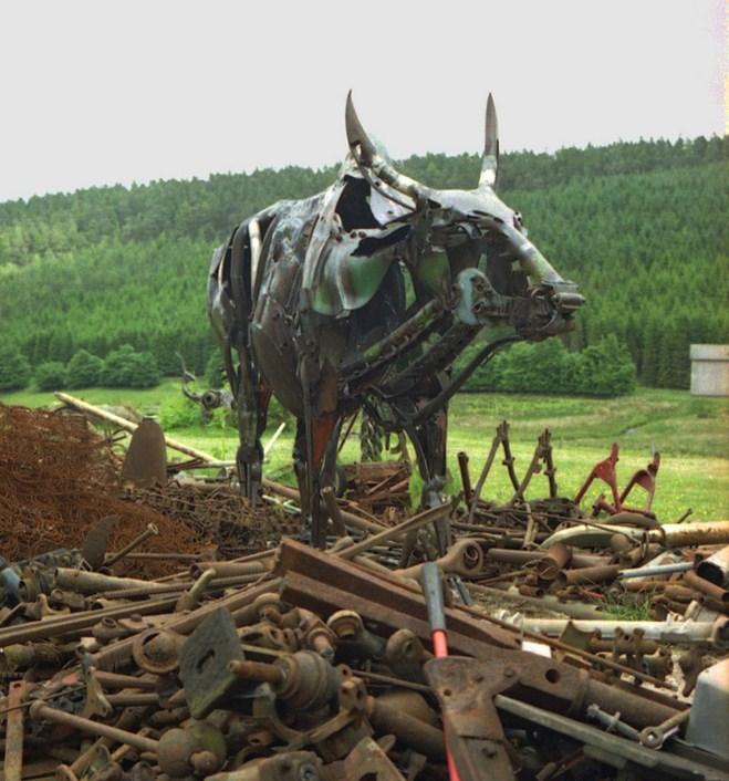 bull in scrap 2