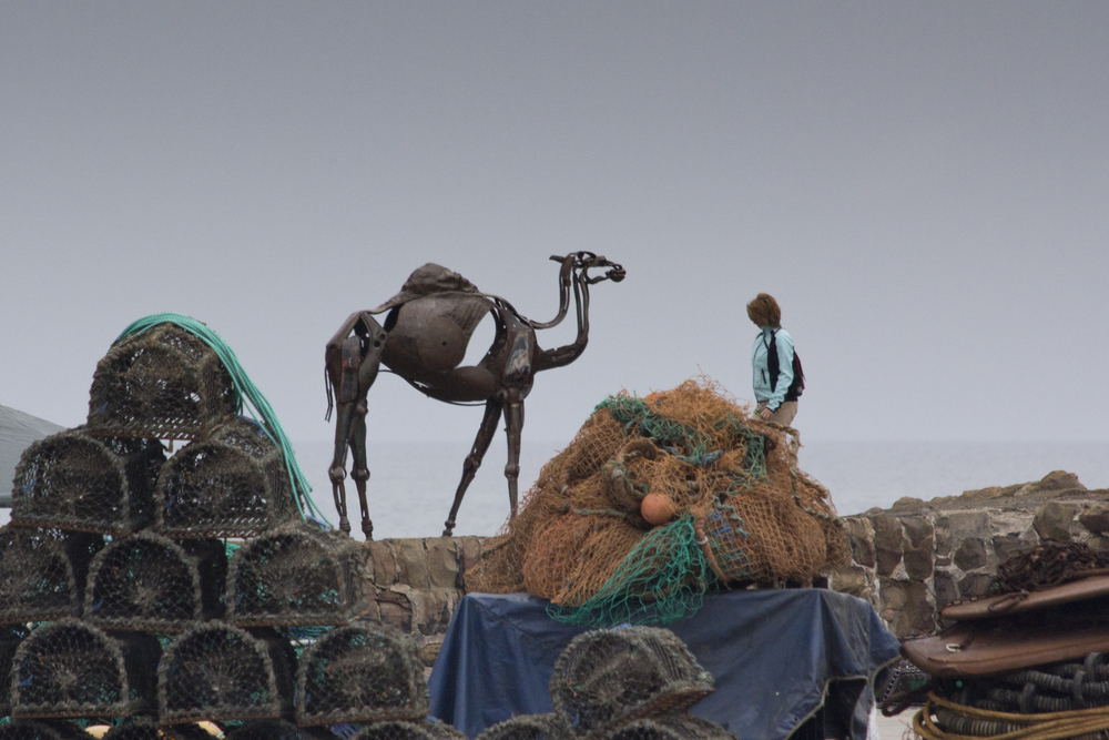 camel at Pittenweem