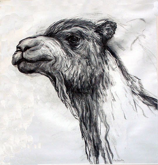 camel drawing2