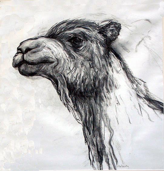 camel drawing2