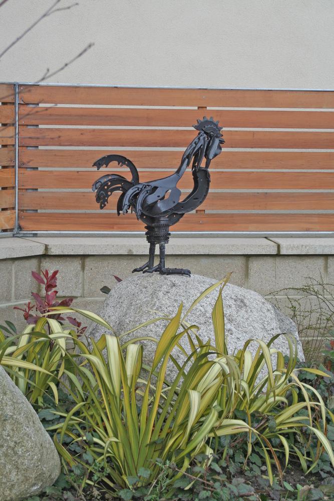 cockerel at Duloch Park