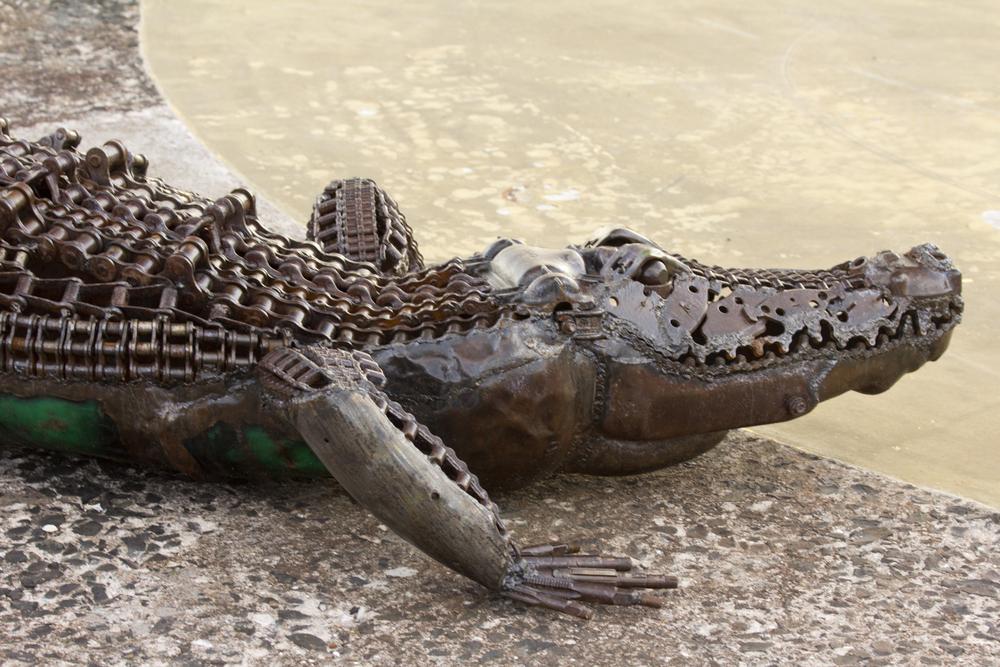 crocodile pittenweem