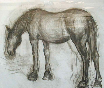 drawing - horse