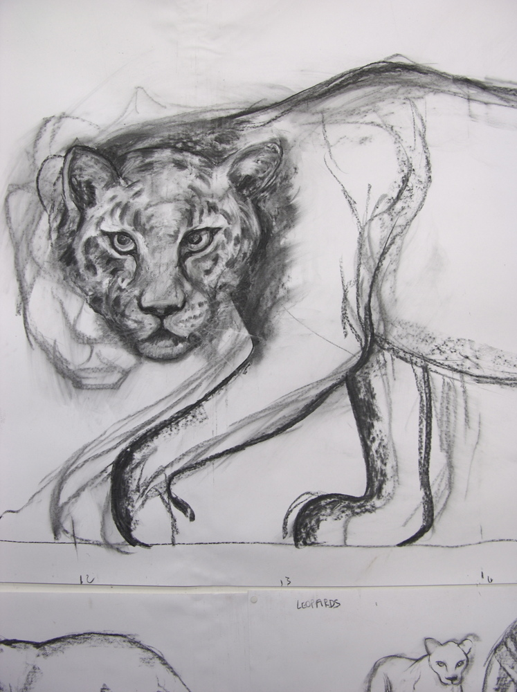 leopard drawing
