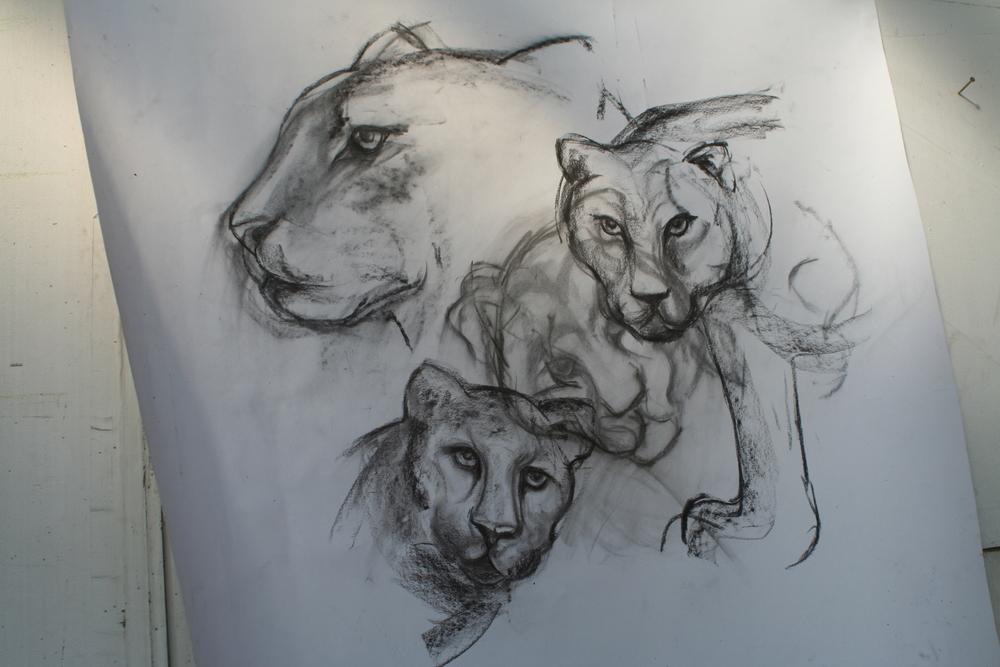 leopards 2
