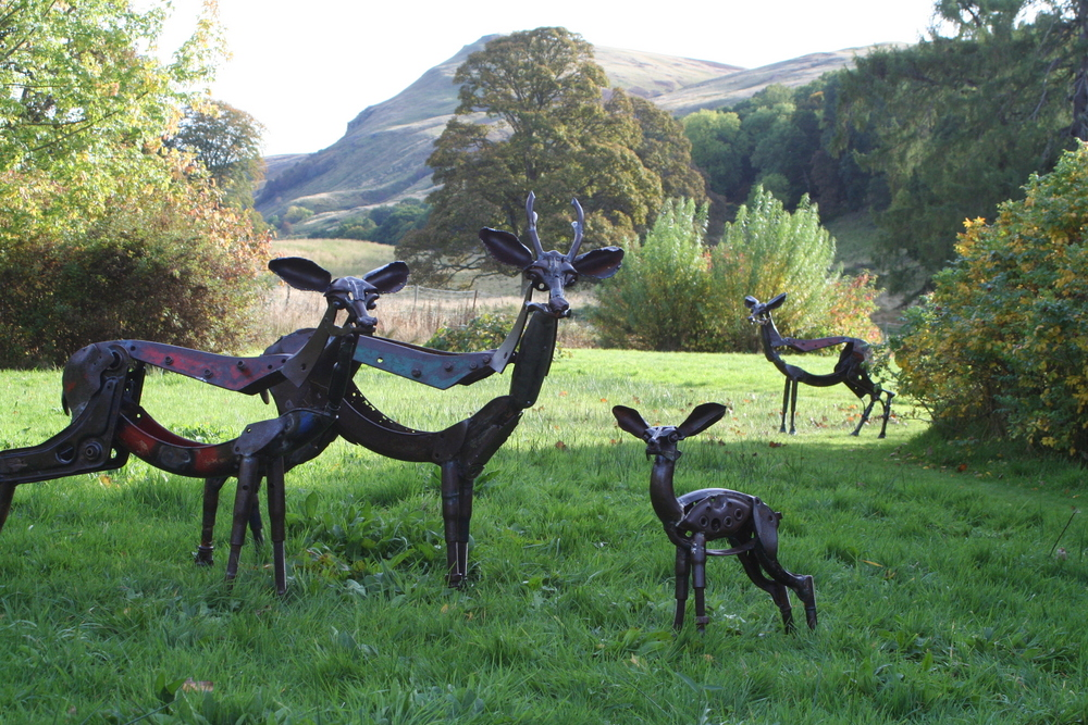 roe deer family 1