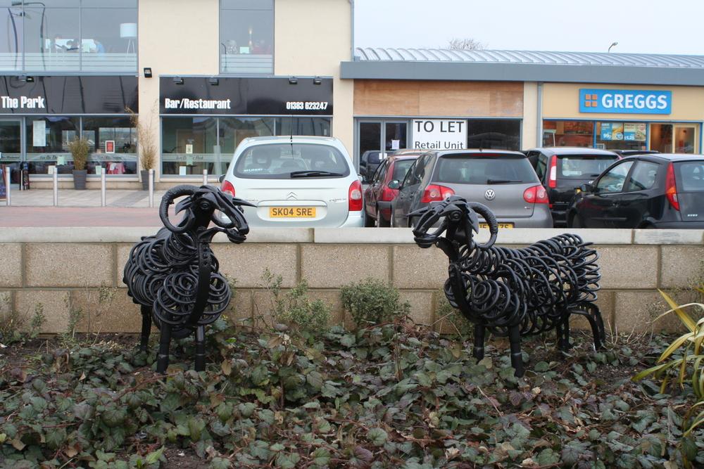 sheep at Duloch park (2)